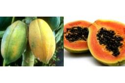 木瓜和番木瓜的区别