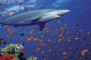 角鲨烯的作用