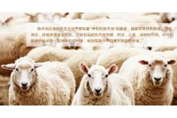 """绵羊油不是绵羊的""""油"""""""