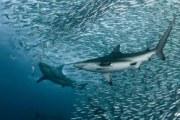 角鲨烯和深海鱼油的区别 元芳你知道不