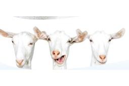 山羊奶身体乳好用吗