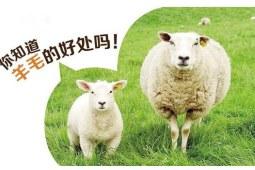 羊毛被好吗 有哪些优势