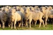 澳洲羊毛被价格贵吗