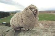 羊毛被有哪些优点 你知道吗