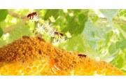 吃花粉有什么副作用