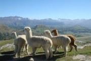 羊驼被透气吗?它的保暖性如何