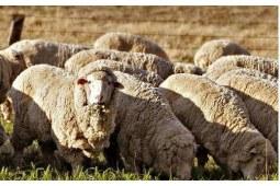 澳洲羊毛被品牌都有哪些