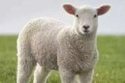 羊毛被会钻毛吗 如何保养比较好