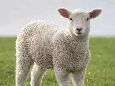 羊毛被会钻毛吗