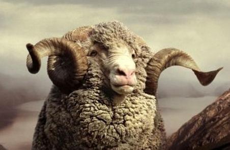 澳洲羊毛和普通羊毛的区别