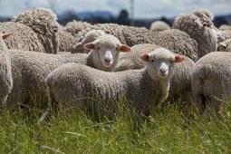 你知道,什么人适合羊毛被吗?