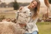 羊驼毛床垫优点都有哪些?