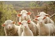 羊毛被的普遍缺点-高档羊毛被有异味