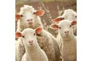 【吐槽】羊驼毛大衣爱起球