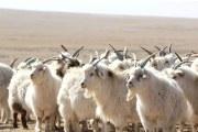 怎样检测羊毛大衣