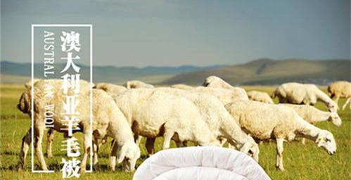 澳洲羊毛被