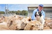 澳洲羊毛被价格如何?