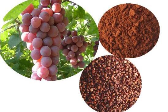 葡萄籽的危害