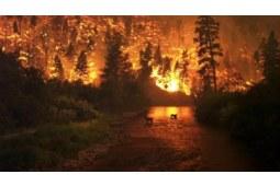 澳洲山火影响有多大,我们还能放心购买吗