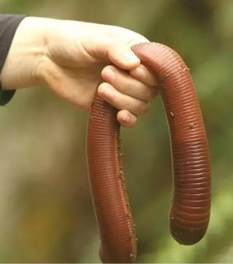澳大利亚的动物