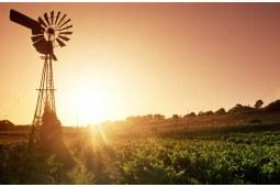 维多利亚女王的第一款澳大利亚葡萄酒