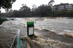 """悉尼洪灾升级,现场宛如""""侏罗纪公园"""""""