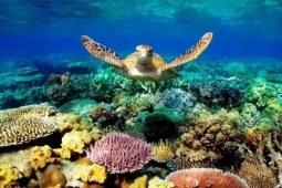 澳洲大堡礁安全评级背后竟然还有政治压力!中国表示这锅我不背 上篇