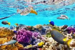 澳洲大堡礁安全评级背后竟然还有政治压力!中国表示这锅我不背 下篇