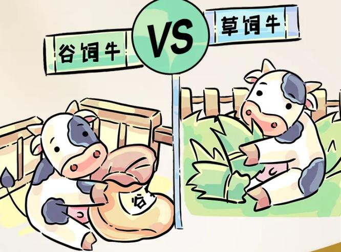 草饲牛VS谷饲牛