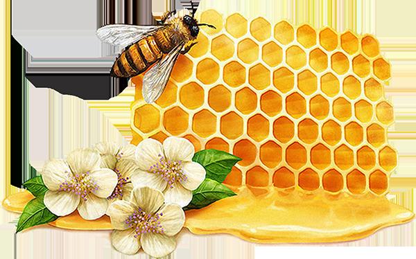 蜜蜂 蜂蜜
