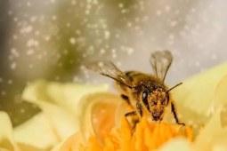 走进蜜蜂的甜蜜事业